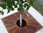 Tree filter box