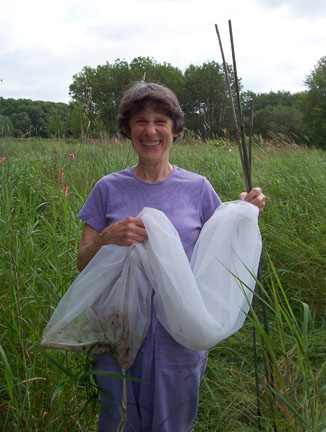 Beetle Rancher Mary, after she has released the biocontrol beetles that she raised, into Fowl Meadow.