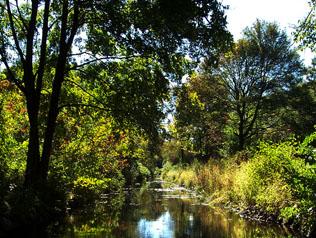 Vegetated banks of Pine Tree Brook, Milton.