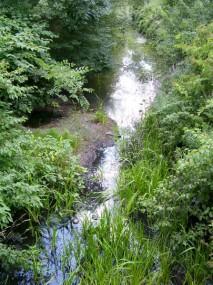 Vegetated banks, Pine Tree Brook, Milton.