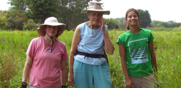 Steph, Marge and Ale spent the morning helping to reduce the spread of exotic, invasive Purple loosestrife.