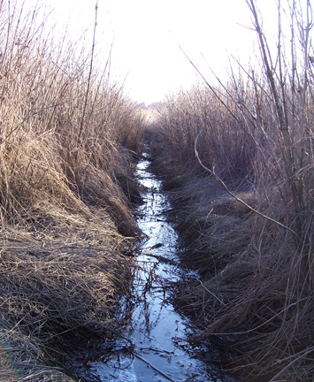 Over the centuries, the creation of ditches in marshlands around Metro Boston has altered the amount of water present, which in turn affects which plant and animal species can live in the area.