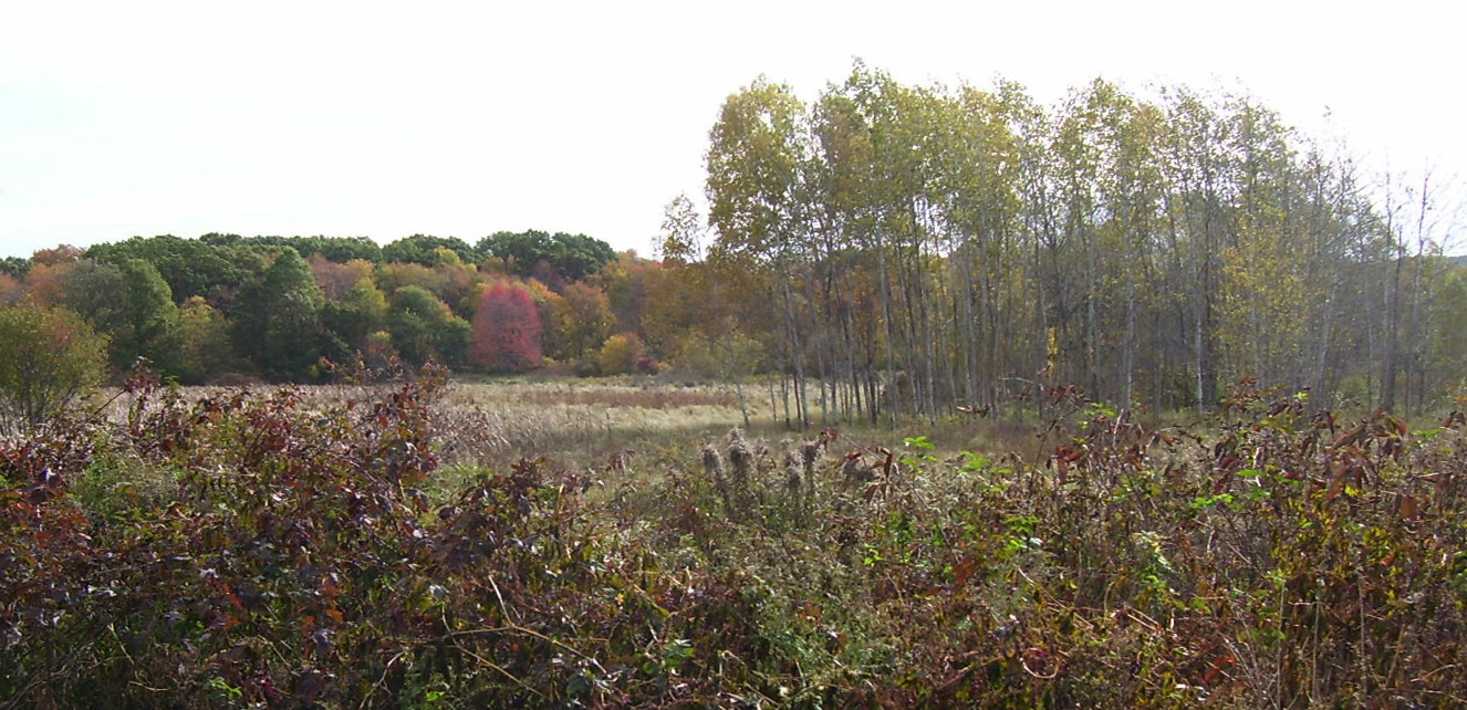 Autumn comes to Fowl Meadow, Readville, 2012.