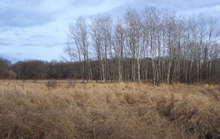 Northern Fowl Meadow, on the Readville-side of Neponset River, late-November 2011.