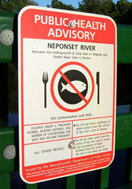 Pollutants in some segments of Neponset River have been absorbed by fish, making them unsafe to eat.