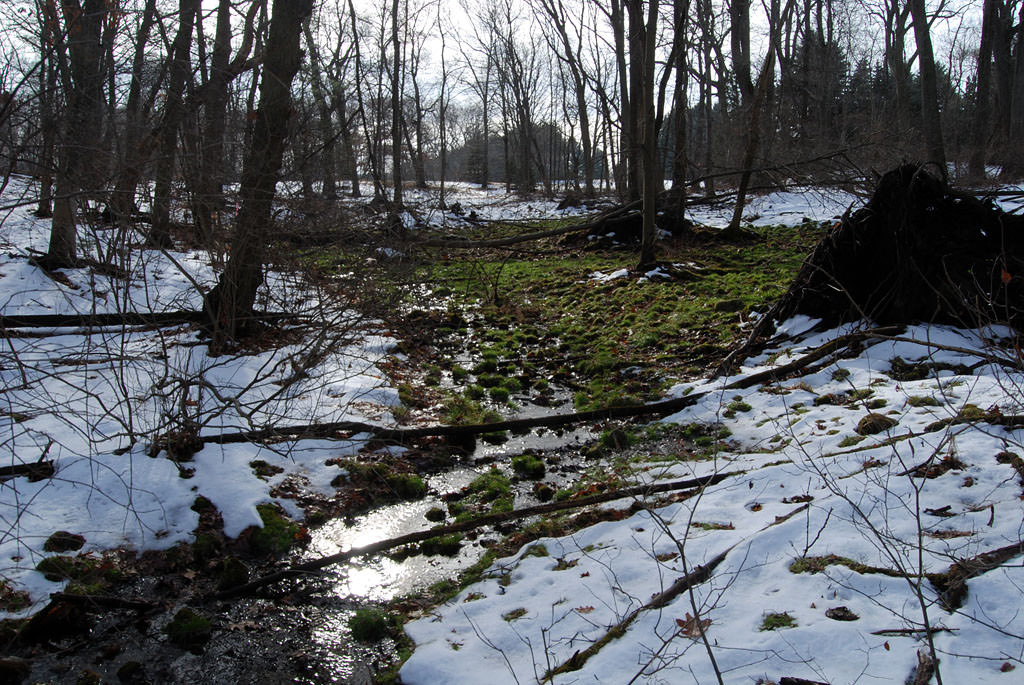 A spring emerging at edge of meadow proposed for 174 apartments, 272 Moosehill Road, East Walpole, 12/21/13. The warmer groundwater has melted the snow