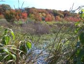 Fowl meadow fall