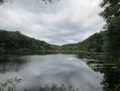 Hammershop Pond Sharon