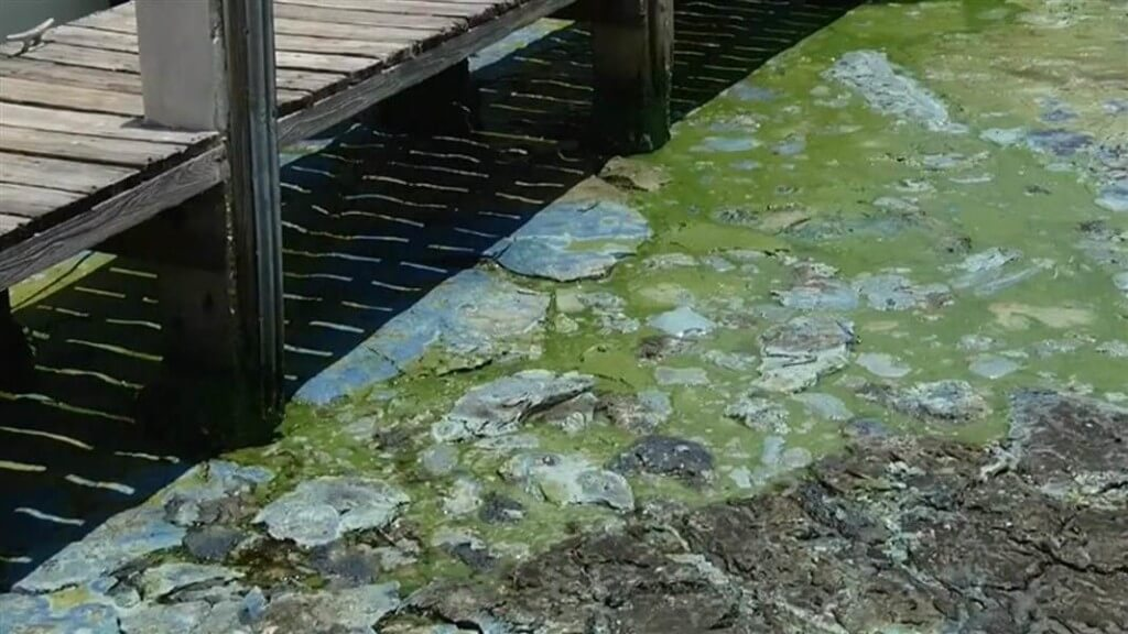 Harmful Cyanobacteria Blooms in Florida Have Triggered a State of Emergency
