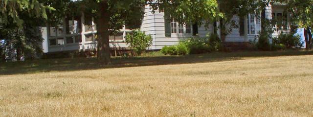 dormant-lawn