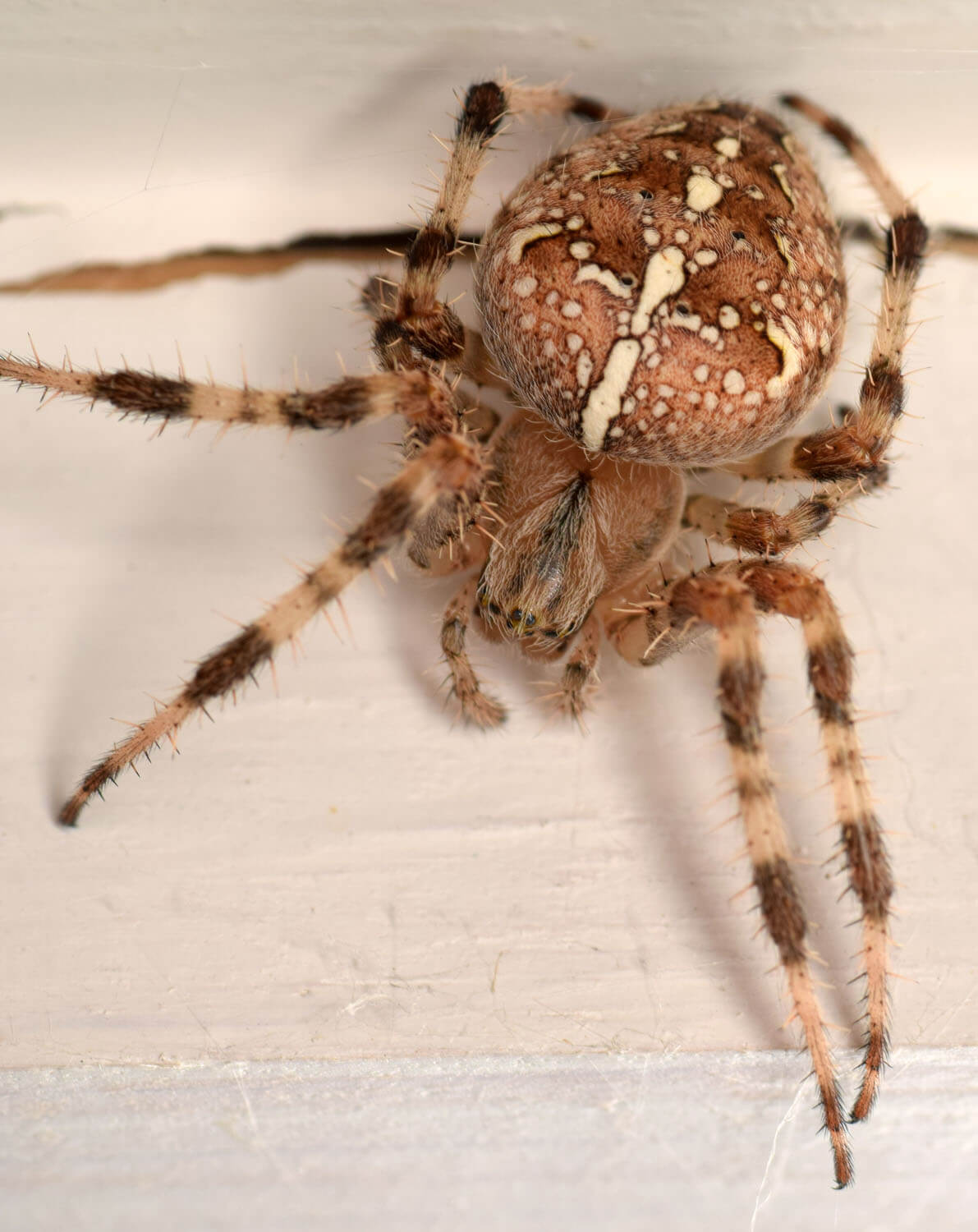 Photos: office spiders | Neponset River Watershed Association